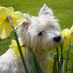 Dog With Flowers