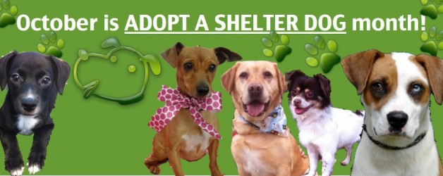2064_Adopt-a-shelter-dog-month-628x250