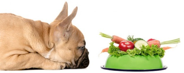 2123_Dog-With-A-Feeding-Bowl-Full-Of-Vegetables-628x250
