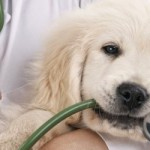 It's a Dog's World… Ebola and Our Pets