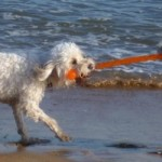 It's a Dog's World … Playing Tug-of-War