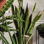 Lifestyles by Estelia – Living and Decorating with Houseplants