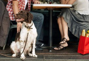 dog_friendly_dining